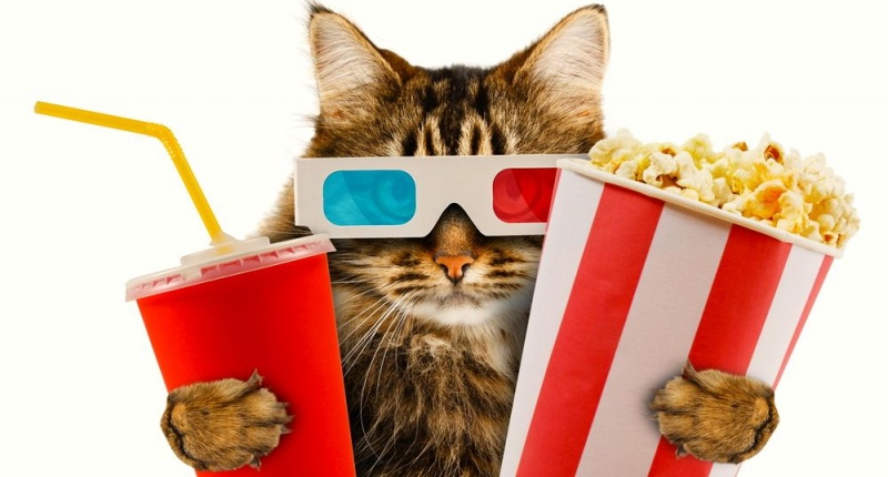 cat wearing 3d glasses holding soda and popcorn
